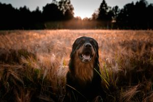 Hund, Köln, Park, Rhein, Wiese – ©Unsplash