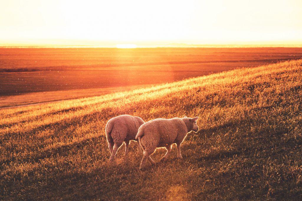 Nordfriesland – ©Unsplash