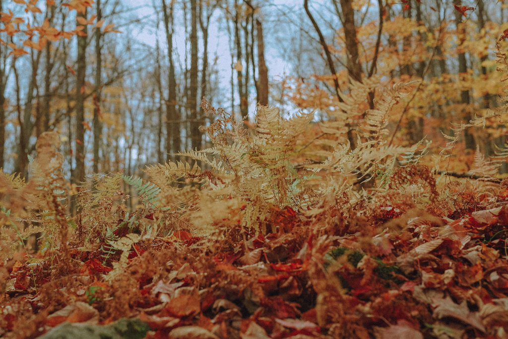 Wald, Köln – ©Unsplash