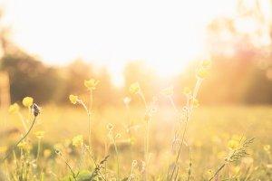 Frühling, Spaziergang – ©Unsplash