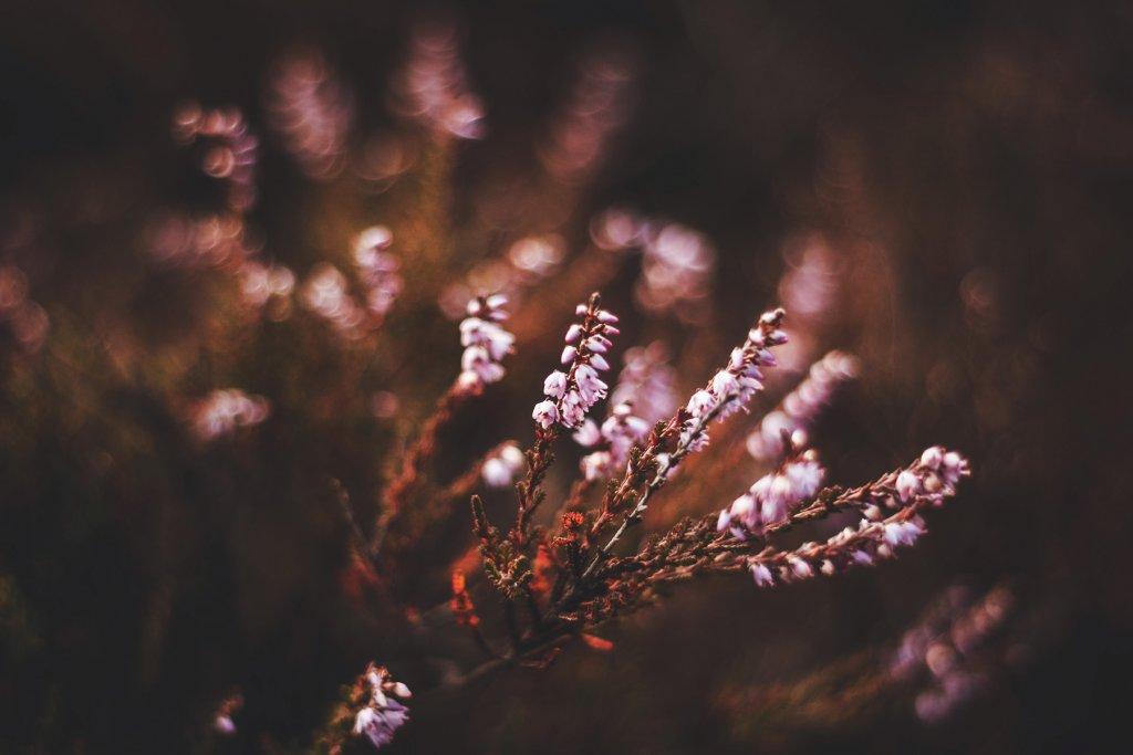 Heide, Wandern – ©Unsplash
