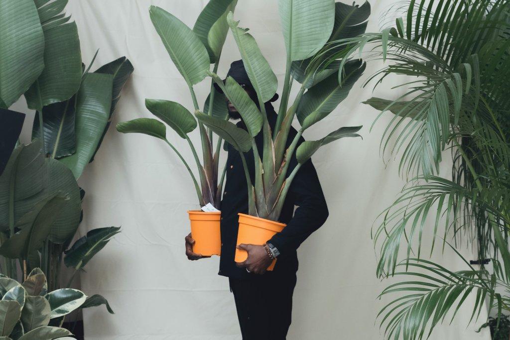 Mauritia Galerie, Pflanzen, Urban – ©Mauritia Galerie