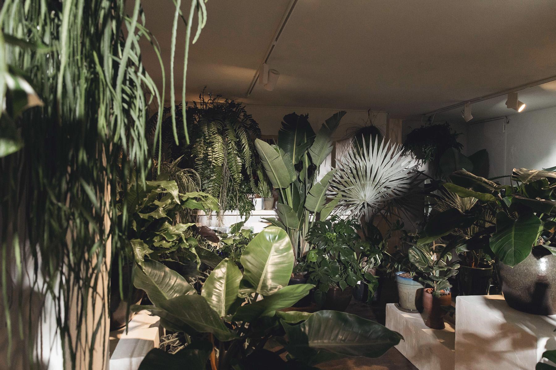 Pflanzen, Köln – ©Mauritia Galerie
