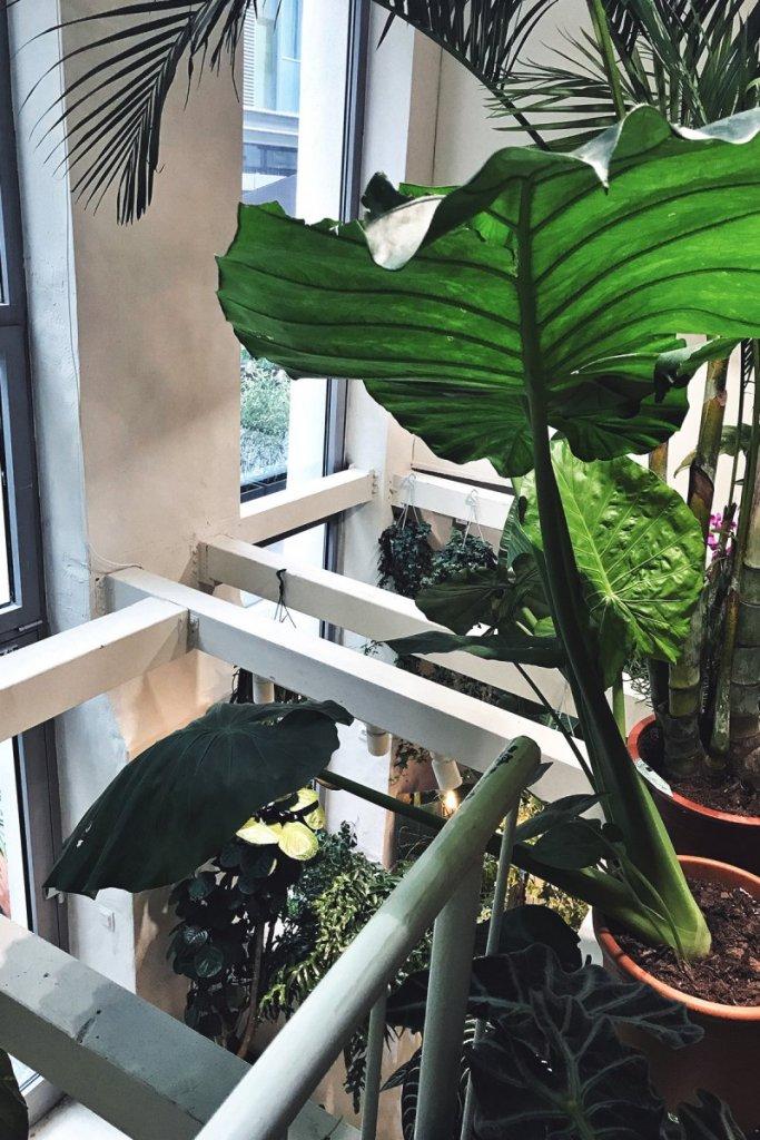 Pflanzen, köln – ©Clara