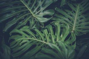 Pflanzen, Zimmerpflanzen – ©Unsplash