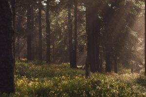 Wald, Stadt – ©Unsplash