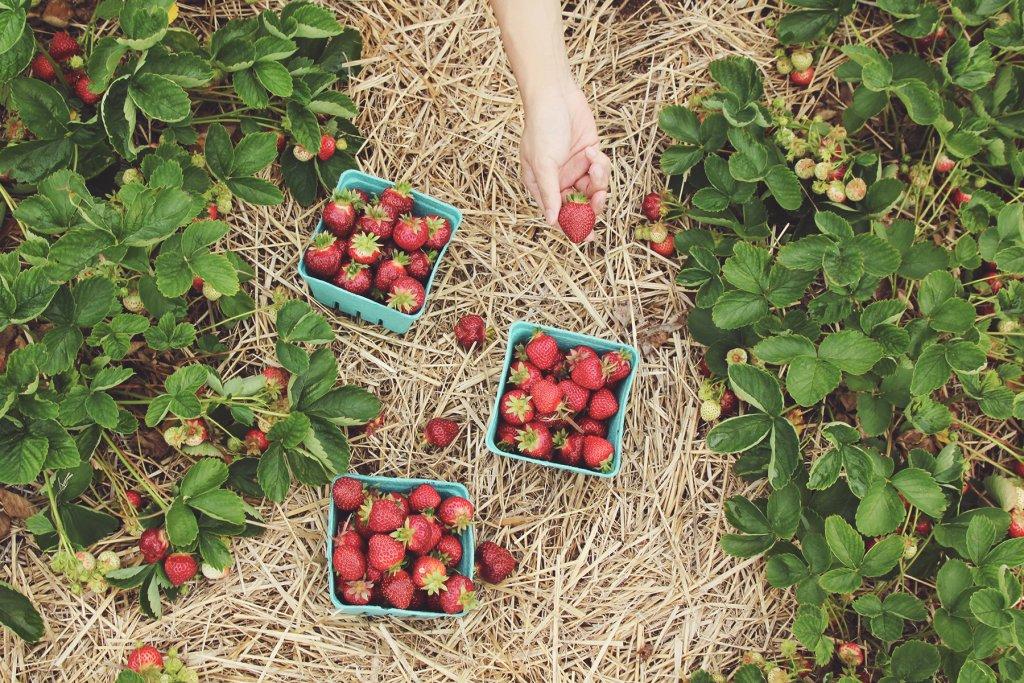 Erdbeeren, Köln – ©Unsplash