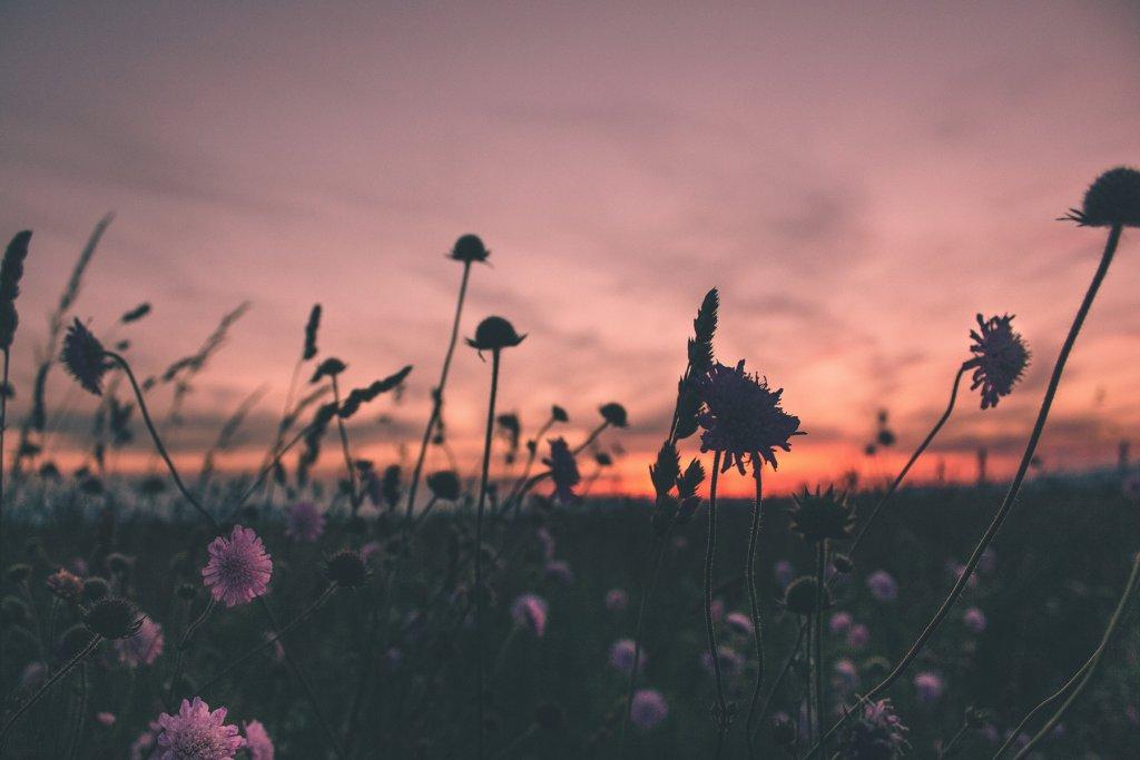 Sonnenuntergang – ©Unsplash
