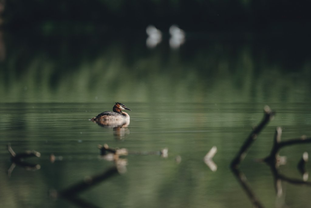 Heiderberg See, Sommer – ©Pixabay