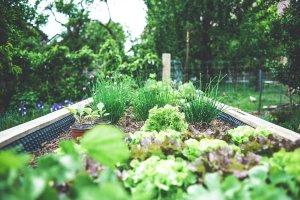 Urban Garden – ©Unsplash