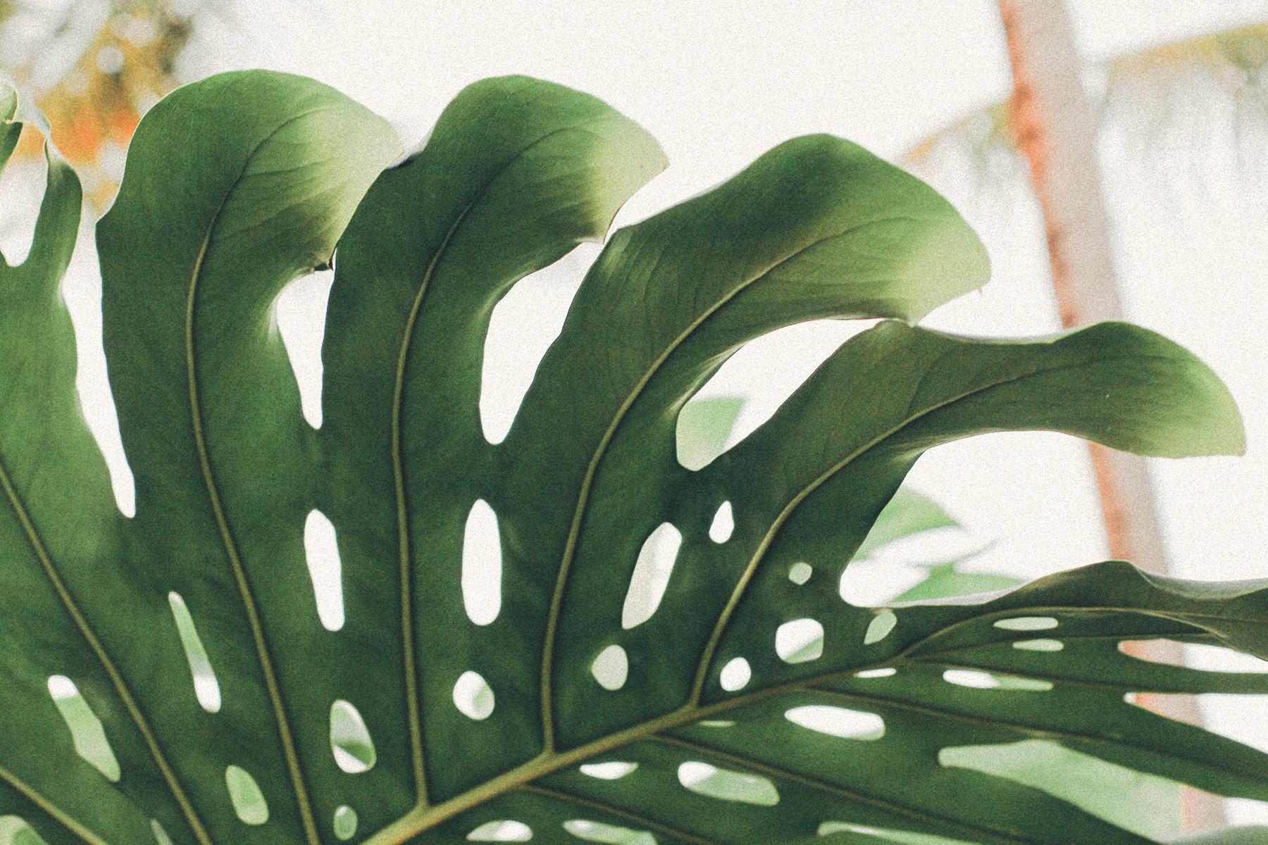 Food, Jungle – ©Unsplash