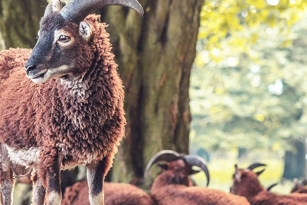 Tierpark Koeln 1 Artikel – ©Lindenthaler Tierpark