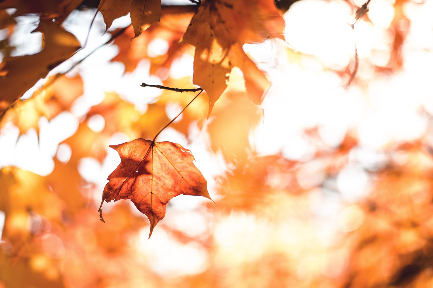 Herbst In Koeln 2 Artikel – ©Unsplash