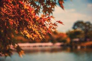Herbst Koeln 1 Artikel – ©Unsplash
