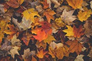 Herbst Koeln 11 Artikel – ©Unsplash