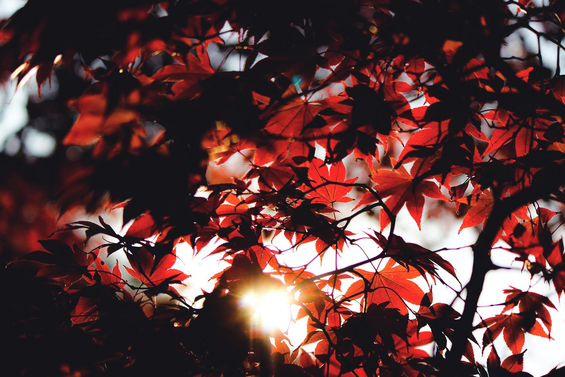 Herbst Koeln 2 Artikel – ©Unsplash